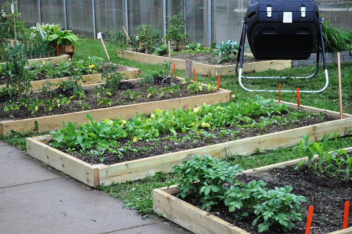 Gardening can reduce stress and mental clarity while also helping to prevent everything from coronary disease to colon cancer. Photo credit: Michelle Lavra l MSU Extension