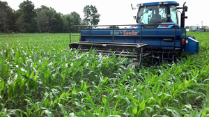 Interseeding cover crops into MI corn | Photo by Dean Baas