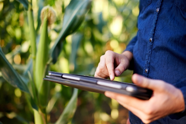 Man using tablet in corn field.