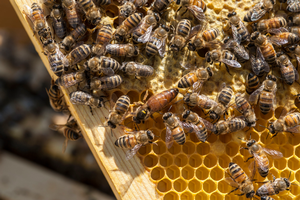 Heroes to Hives: A new program to support veterans in beekeeping
