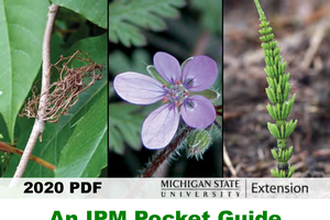 A mobile-friendly guide for weed identification in nurseries and landscapes is now available