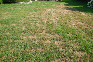 Tips for seeding lawns in September