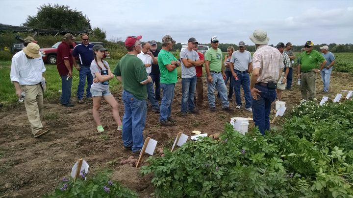 Potato growers gathered at Wilk Farms August 2016 for a field day highlighting the variety trial plots. Photo: James DeDecker, MSU Extension.