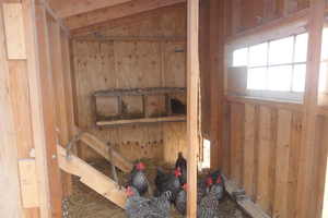 A group of chickens in a chicken coop