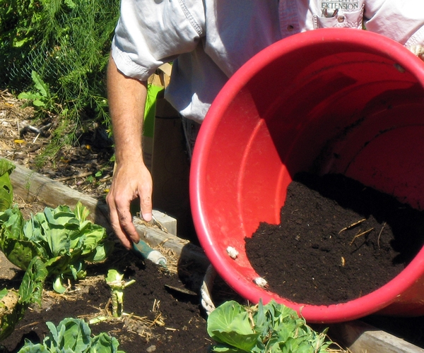 Organic matter can be increased by spreading compost or top soil around garden plants. Photo credit: Joy Landis, MSU