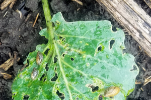 West central vegetable update - June 5, 2019