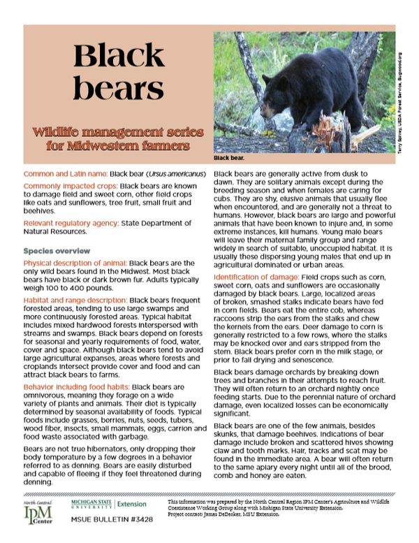 Photo of first page of Black Bears article.