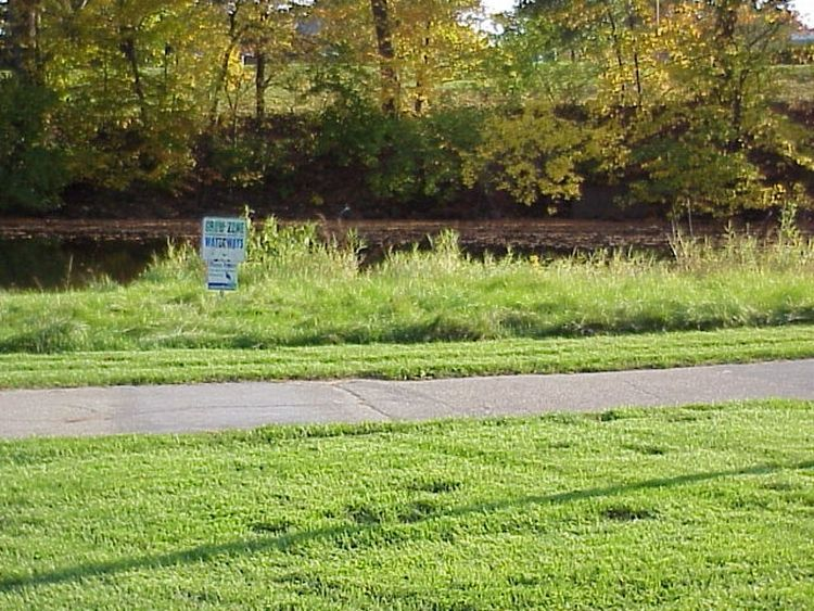 A vegetation buffer by a river. | MSU Extension