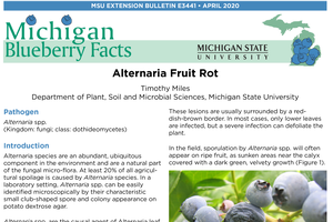 Michigan Blueberry Facts: Alternaria Fruit Rot (E3441)
