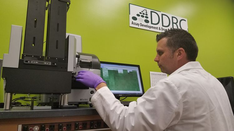 Thomas Dexheimer,  manager of Assay Development and Drug Repurposing Core Facility at MSU, works in the lab.