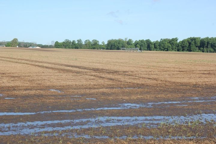 Irrigated field with standing water