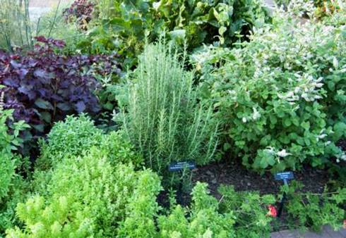 Herb Gardens Are One Of The Most Por For Your Average Do It Yourselfer To Start Is Because Can Be Grown In An Indoor