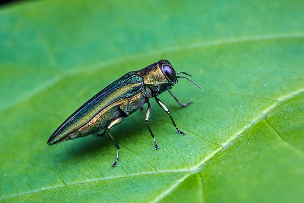 How to control invasive pests while protecting pollinators and other