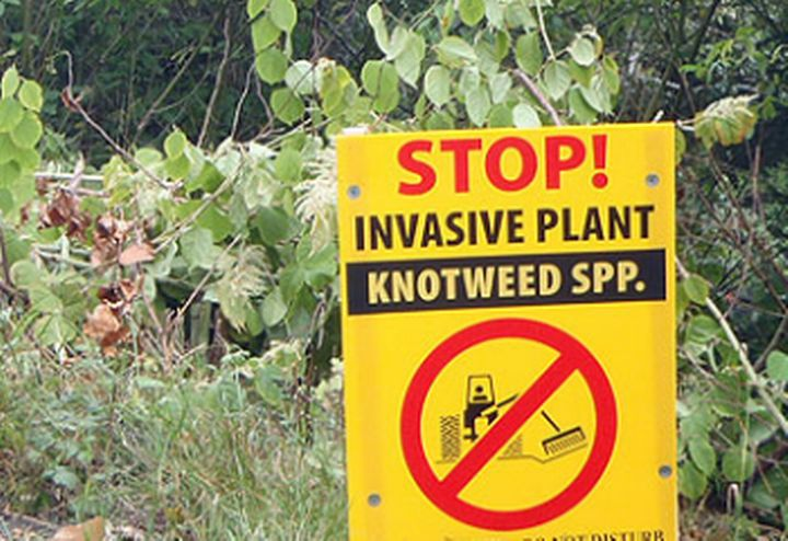 Informational sign regarding a Japanese Knotweed control site in British Columbia. Photo credit: Invasive Species Council of British Columbia.