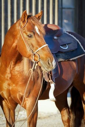 speed index chart for quarter horses