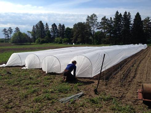 Floating row covers can provide protection from the sun and wind for newly established transplants.
