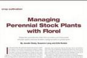 Managing perennial stock plants with Florel