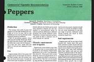 Peppers: Commercial Vegetable Recommendations (E1815) - MSU Extension