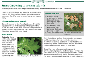 Smart Gardening to prevent oak wilt
