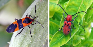 Introducing Michigan insects in the garden
