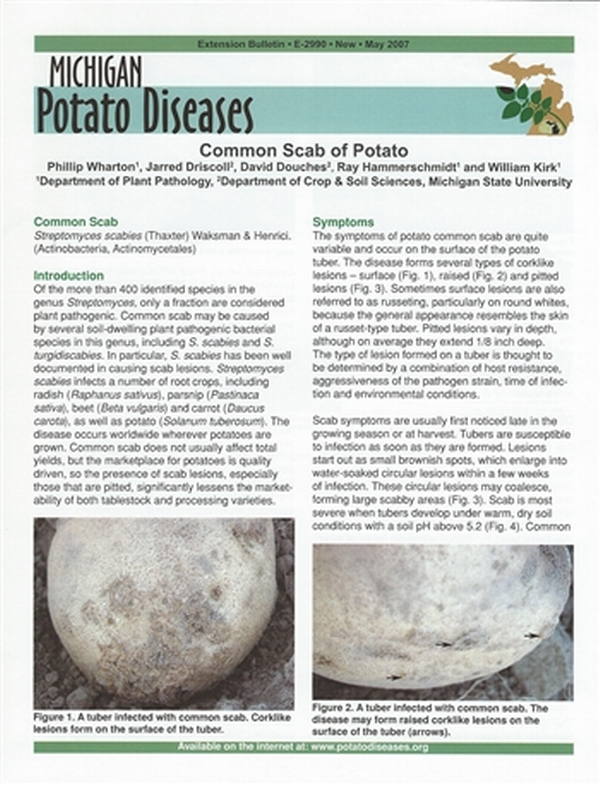 Potato Diseases: Common Scab of Potato (E2990) - MSU Extension