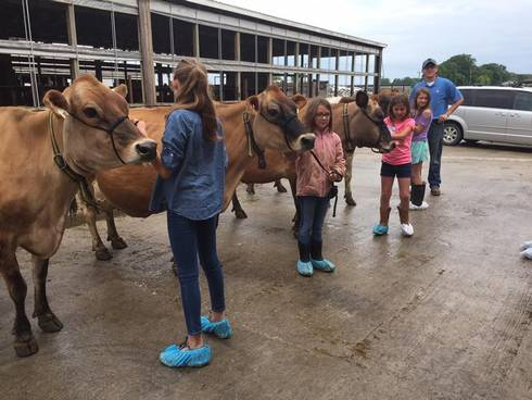 Youth at Thumb Dairy Odyssey Days are learning new showmanship techniques.