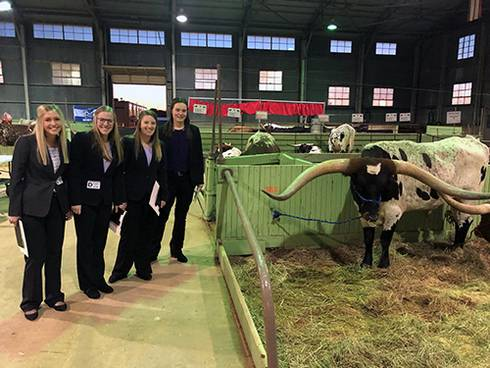 Students at Southwestern Exposition Livestock Show and Rodeo, with cows.