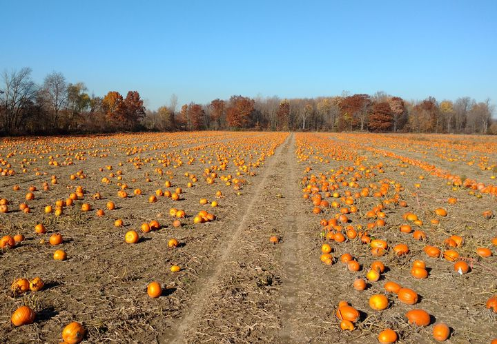 2016 was a bumper pumpkin year for many growers.