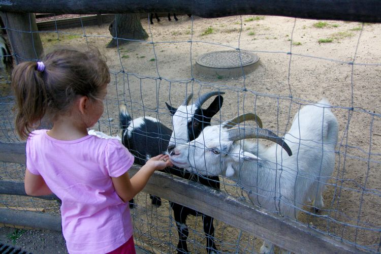 Simple precautions make petting zoo visits safe and successful for all.