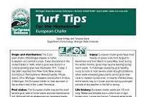Turf Tips for the Homeowner: European Chafer (E0022TURF)