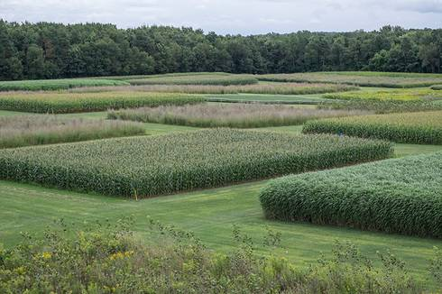 Photo of cellulosic biofuels research experiment.