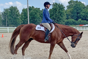 Defining horse jargon: Movement terms