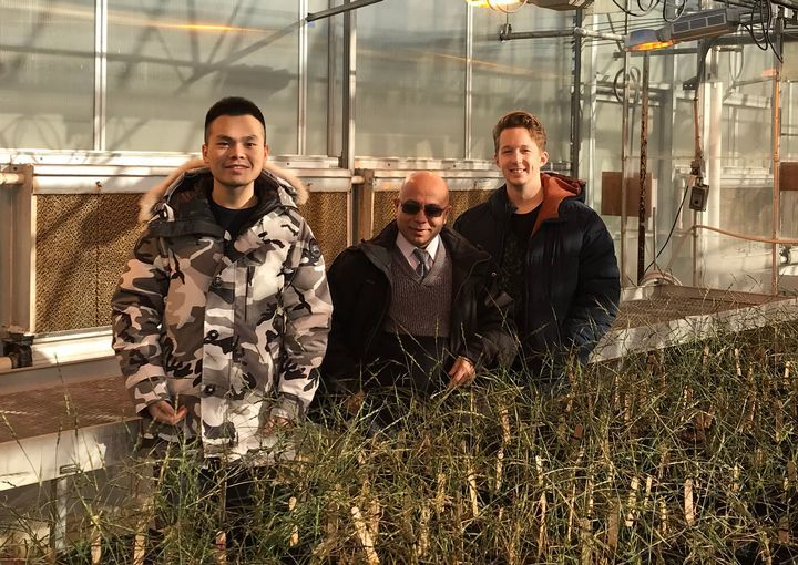 Venu Gangur has created a model that tests the allergenicity of wheat varieties with help from students Haoran Gao and Rick Jorgensen.