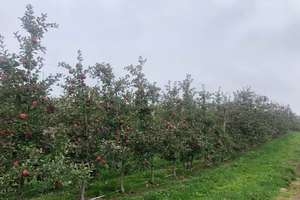 Grand Rapids area apple maturity report – Oct. 14, 2020