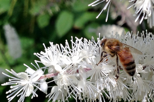 How the green industry and gardeners can get involved in pollinator projects