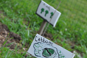 Social and emotional health are important benefits of school gardens