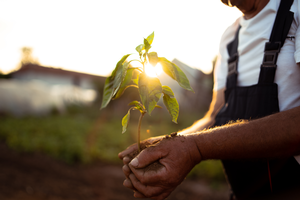 A farmer holds a plant in his hand as the sun peeks through the leaves