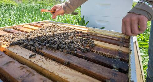 Bees can carry bring pollen containing pesticides back to the hive.