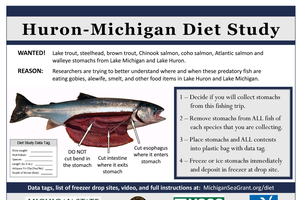 Fish diet study reaches another milestone