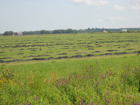 Chippewa County hay field with partially burned windrows, Aug. 15, 2017. Photo by Jim Isleib, MSU Extension.