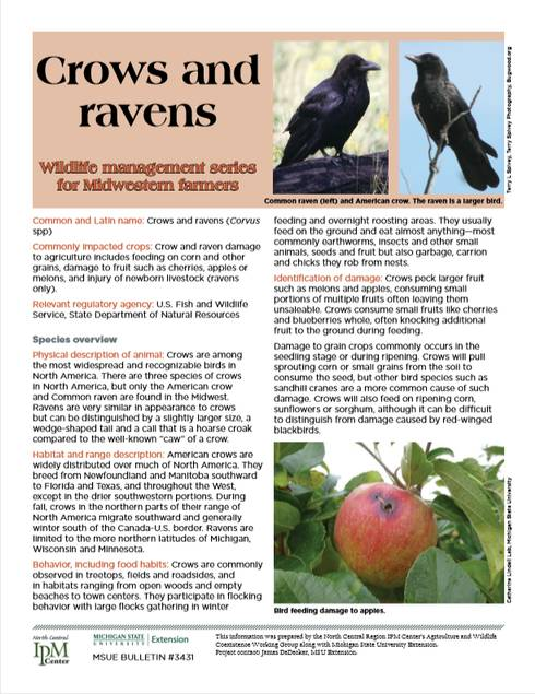 Photo of Crows and Ravens article first page.
