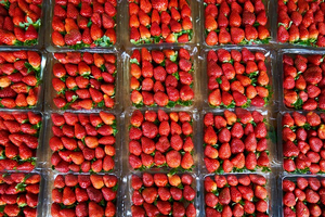 Join in on National Pick Strawberries Day