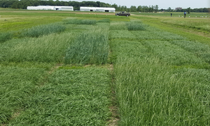 2017 Michigan Forage Variety Test Report now available