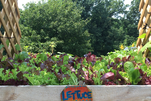 Demonstrate your school garden's environmental commitment