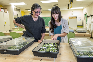 MSU researcher Rebecca Grumet (left) with a student in the lab.