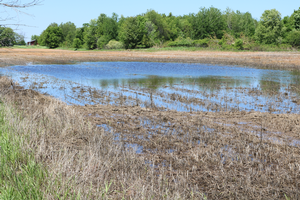 Standing water still common in many fields in the Central Regions of Michigan