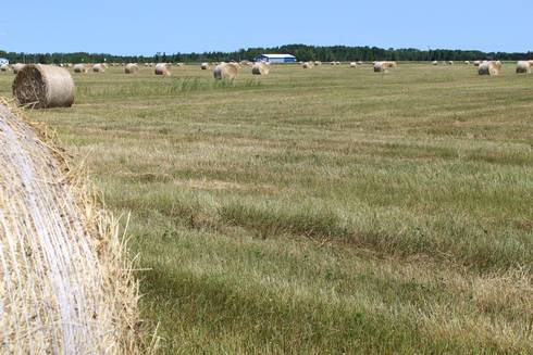 Baled hay in Dafter, Michigan