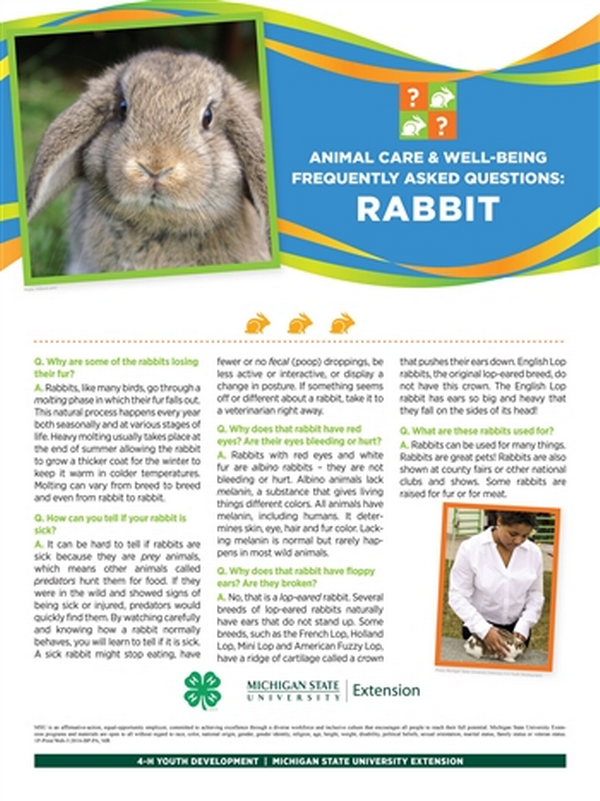 Poster with a rabbit and rabbit facts.