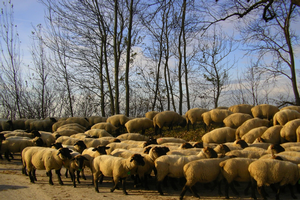 What does a herd health plan look like?