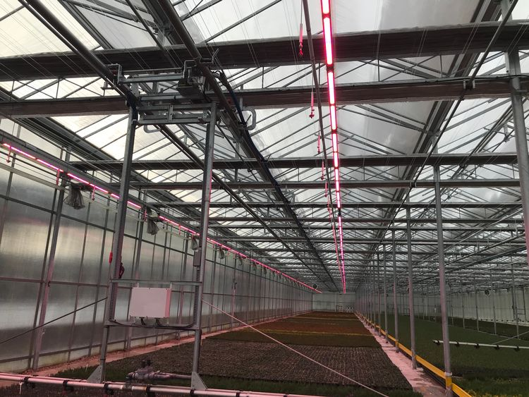 LED lights in a greenhouse